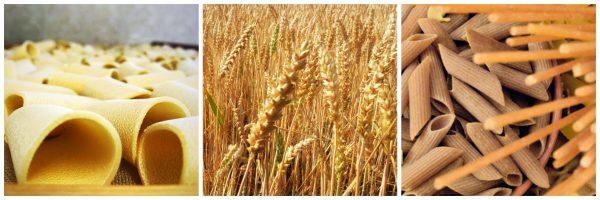 Spigabruna grano bio Scopri il Sannio